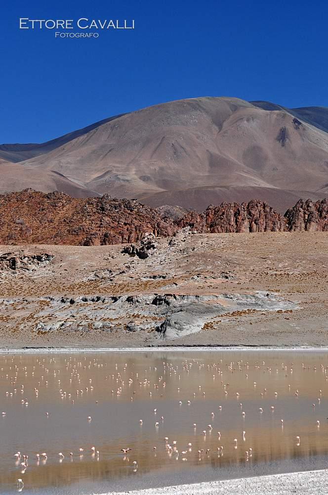 Argentina-DSC_0334x