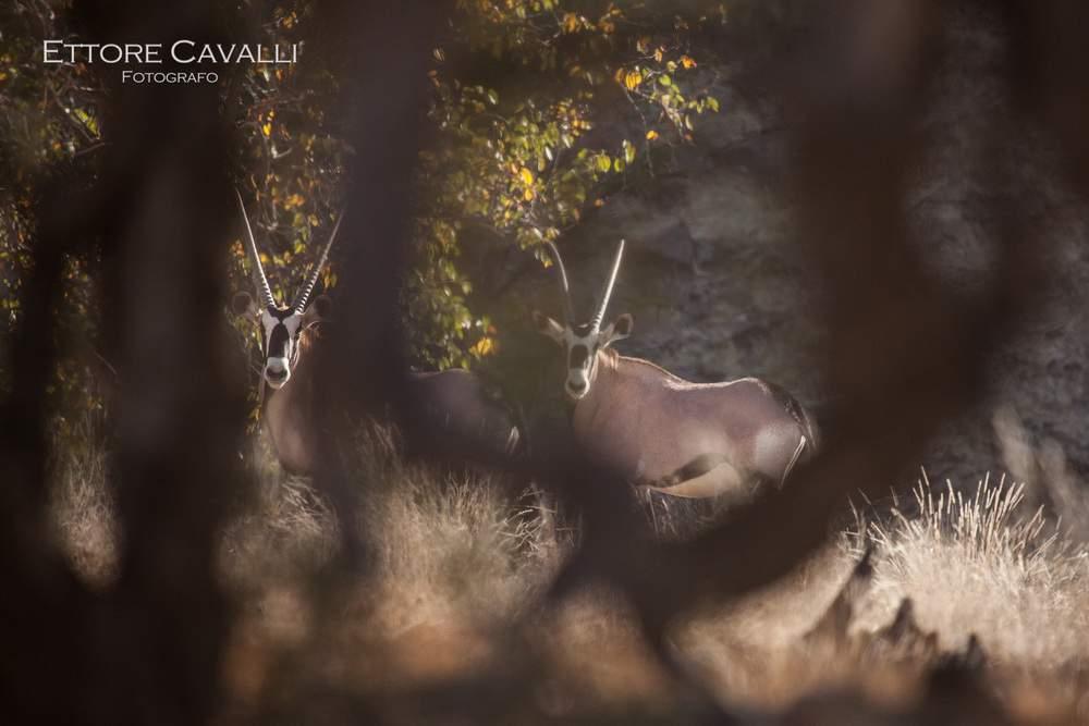 Namibia-IMG_3631