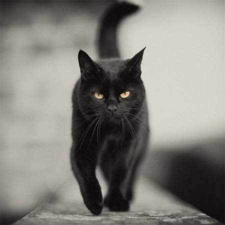 Il-più-forte-gatto Rufus
