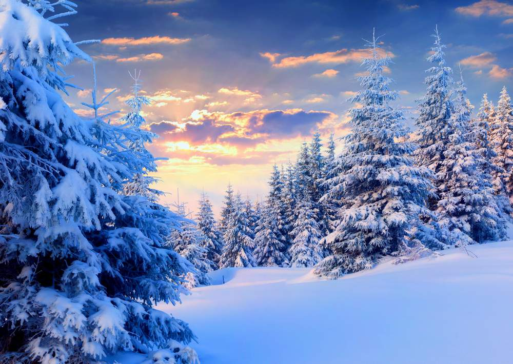 SilenziInverno-pine-winter-christmast-snow-dawn-pure-top-best-picture-desktop
