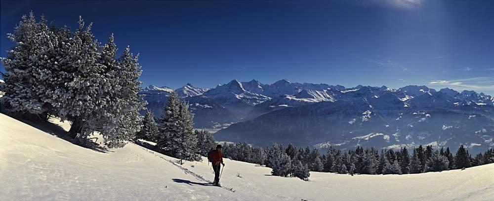 Dal Niederhorn (Prealpi Bernesi) panorama su Eiger, Moench, Jungfrau e Oberland Bernese, Svizzera