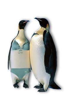 datdubbieccessi-pinguini_in_bikini