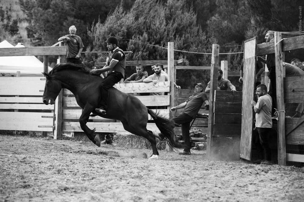 rodeo_69A1127