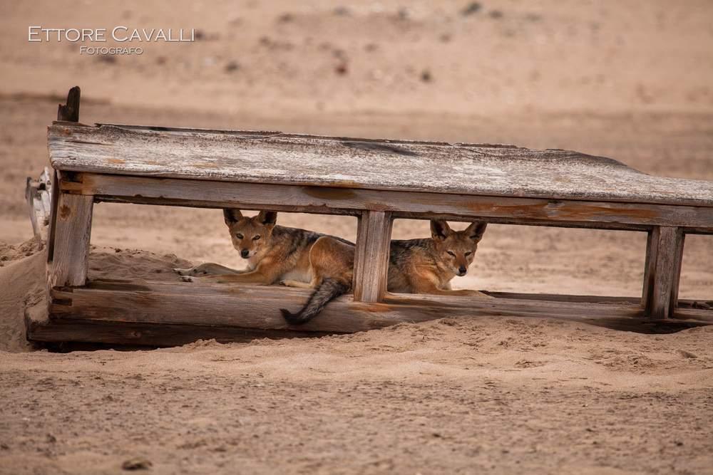 Namibia-IMG_5540