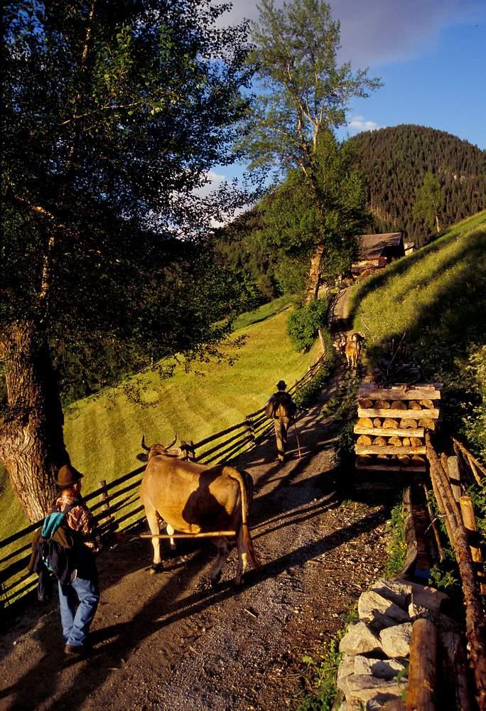 Stelvio (Stilf), mucca, pastori, S. Martino