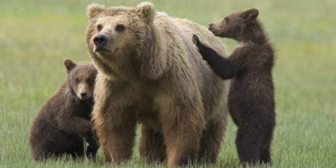 gli-spari-sopra-orsa-daniza-02